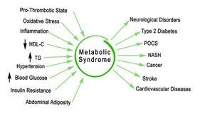 Metaboliczny syndrom royalty ilustracja