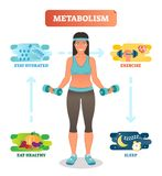 Metabolism concept vector illustration diagram,biochemical body cycle.Eating healthy,drinking water,exercising and sleeping well. Metabolism concept vector stock illustration
