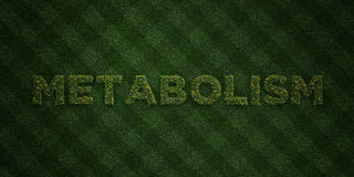 METABOLISM - fresh Grass letters with flowers and dandelions - 3D rendered royalty free stock image Royalty Free Stock Images