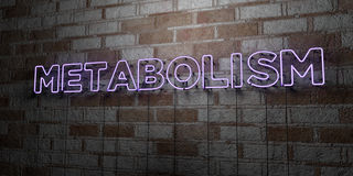METABOLISM - Glowing Neon Sign on stonework wall - 3D rendered royalty free stock illustration. Can be used for online banner ads and direct mailers Stock Photography