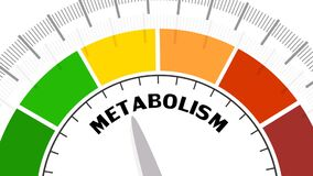 Metabolism Level Concept