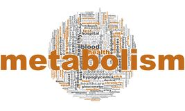 Metabolism word cloud vector illustration
