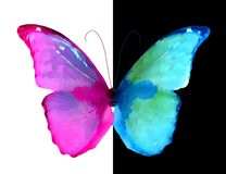 Metade cor-de-rosa e azul da borboleta. Vetor ilustração royalty free