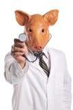 Metafora di influenza dei maiali Fotografia Stock Libera da Diritti