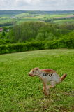 Metal никакой знак Pooping собаки Стоковые Фото
