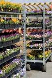 Metal полки заполненные с квартирами красочных цветков Стоковая Фотография RF