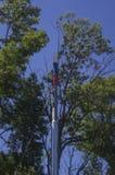 Metal цвета трубы русского флага в старухах деревьев 2 Стоковые Фотографии RF