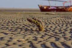 Metal asado en la playa con el barco Imagen de archivo libre de regalías