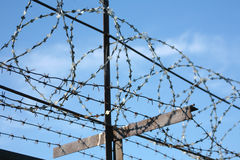 Metal barbed wire Stock Photography