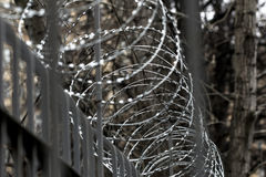 Metal barbed wire on fence Stock Photo