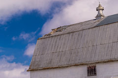 Metal barn roof. Stock Images