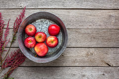 Metal basin with apples in water. Autumn harvest background Royalty Free Stock Image