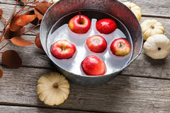 Metal basin with apples in water. Autumn harvest background Stock Photos