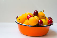 Metal basket full of apricots and cherries Royalty Free Stock Photos