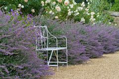 A metal bench in a flower bed. A metal iron bench seat set in a flower bed of lavender and roses english country garden Royalty Free Stock Image