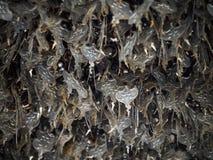 Metal Bo leaf Obraz Stock