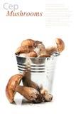 Metal bucket of cep mushrooms Stock Images