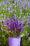 Metal bucket with lavender Stock Photography