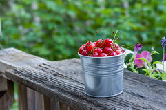 Metal bucket of sour cherries Stock Images