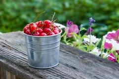 Metal bucket of sour cherries Stock Photo