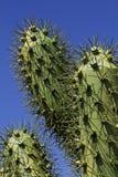 Metal cactus Royalty Free Stock Photos