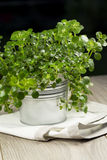 Metal container with fresh organic herbs Stock Photo