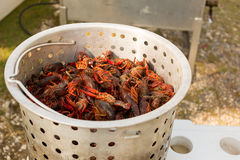 Metal container full of live crawfish. Live crawfish in a metal cooking pot ready to be boiled stock images