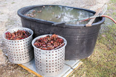Metal container full of live crawfish to be cooked. Live crawfish in a metal cooking pot ready to be boiled and purge tub stock images