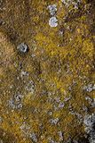 Metal covered with moss, lichen. Royalty Free Stock Photography