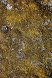 Metal covered with moss, lichen. Color yellow-brown. Royalty Free Stock Photos