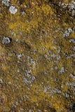 Metal cubierto con el musgo, liquen Color amarillo-marrón Fotos de archivo libres de regalías