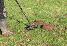 Metal Detecting Checking Hole. Digging a hole to retrieve signal metal detecting royalty free stock images