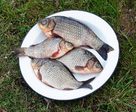 Metal dish with fresh carp Stock Photography