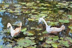 Metal ducks in a pond Royalty Free Stock Images