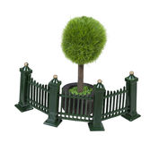 Metal Fence Next to Potted Tree. Metal fence with scrollwork painted green in front of a potted tree Stock Image