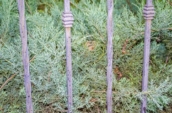 Metal fence and plants Royalty Free Stock Images