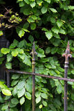 Metal fence. In the shape of a spear in a garden Royalty Free Stock Photo