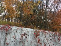 Metal fence, trees, maple leaves. Metal fence, trees and maple leaves. Vladivostok countryside, nature, autumn Stock Photography