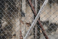 Metal fence wire for background.  royalty free stock photography