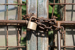 Metal gate locked with chain and padlock.  Stock Photos