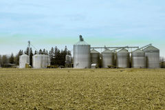 Metal grain facility on a farm. Metal grain silos for crop drying in a field on a farm Royalty Free Stock Photo