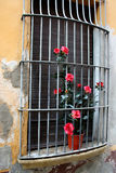 Metal Grate Window With Flowers Stock Image