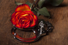 Metal hand cuffs. And a rose royalty free stock photo