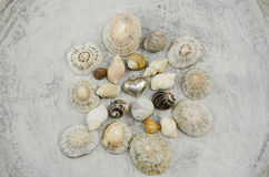 Metal heart among shells. Shells around mini metal heart pendant Royalty Free Stock Photos