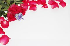 Metal heart surrounded by roses. Silver heart royalty free stock photography
