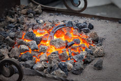 Metal horseshoe is heated in the forge on coals Stock Image