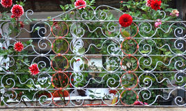 Metal  house fence with flowers Royalty Free Stock Photos
