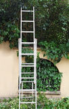 Metal ladder. Collapsible metal ladder for pruning in front of green hedge Royalty Free Stock Photo