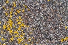 Metal le concept en gros plan de lichen de rouille - vieux métal rouillé avec le lichen Image stock