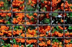 Metal mesh fence Stock Photo